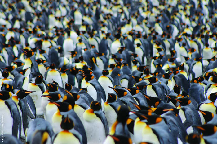 penguins photo by Lizzy Farthing